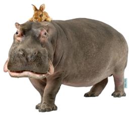 Muursticker Nijlpaard met konijn