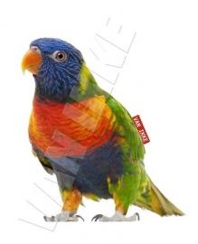 Iron-on regenboog vogel