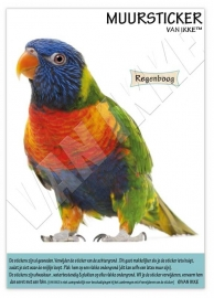 Regenbogenvogel