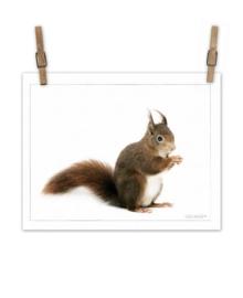 Eekhoorn op canvas XL