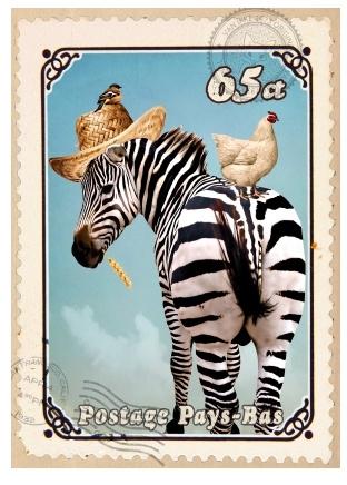 Kaart Zebra met hoed