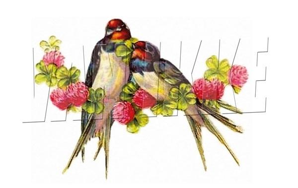 Twee vogeltjes