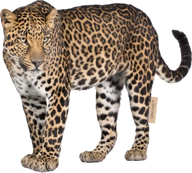 Luipaard XL