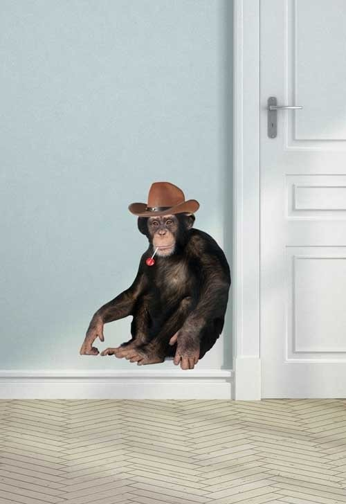 Wall decal Monkey with a lolly