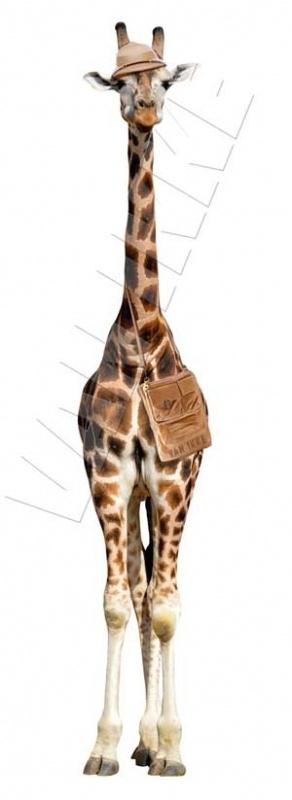Giraf op Safari