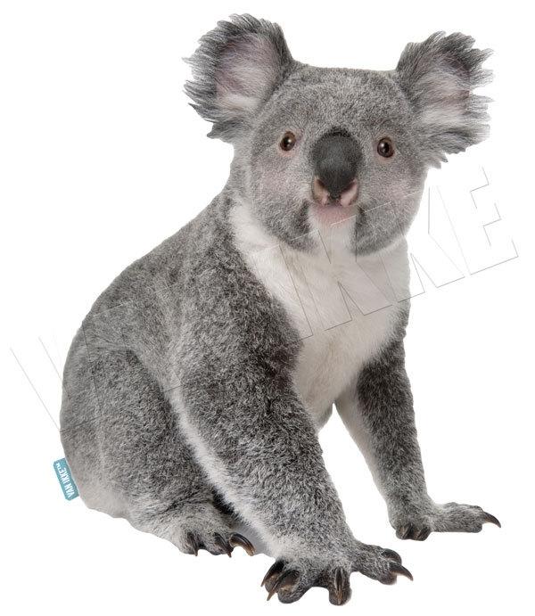 Koala XS