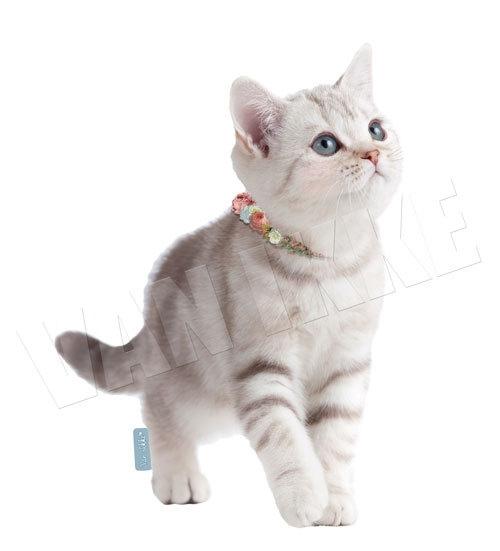 Kitten wit