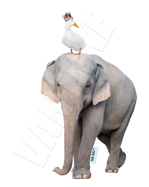 Elephant with goose