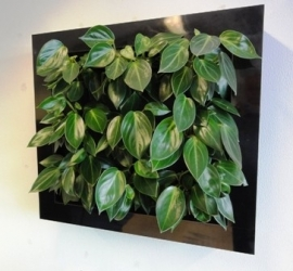 Frame around plantmodules