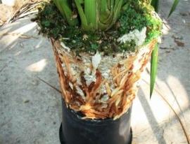 Fytocell lightweight substrate - 150 liter bag