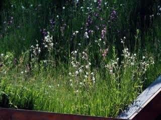 Wild Flower Sedum Mat