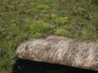 wildflowersedumroofturf.jpg