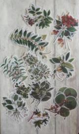 Stickers / planten - flora - botanical / 60stk