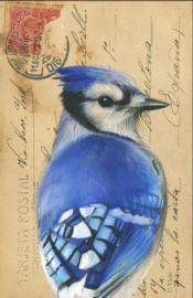 kaart met envelop Blauwe Gaai
