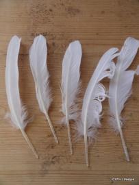 Veren wit / 10 stk