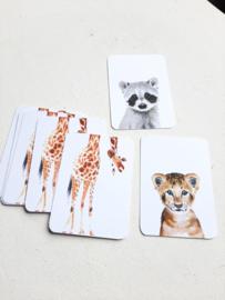Mini kaart set - dieren | 3stk
