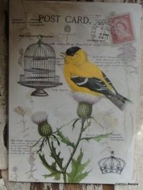 Notebook - Schriftje / Bird postcard