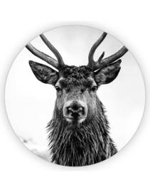 Sticker sluitzegel XL Hert | 65mm | 5stk