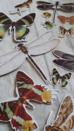 Vlinder set / 15 stk