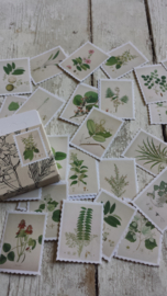 Stickers / vintage plants / 45 stk