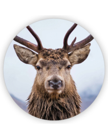 Sticker sluitzegel XL - Hert color | 65mm | 6stk