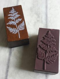Houten stempel / forest plant