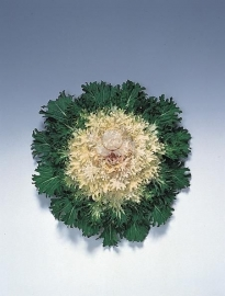 Brassica gekarteldbladig - EKA060
