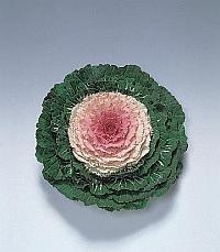 Brassica Sierkool - EKA093
