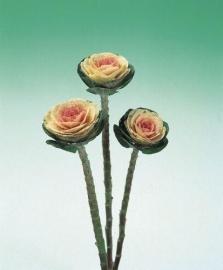 Brassica Sierkool (snij) - EKA015