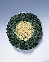 Brassica gekruldbladig - EKA013