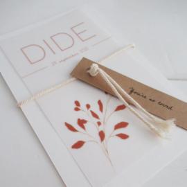 *NIEUW* Geboortekaart Dide kalk  - oud hollands karton