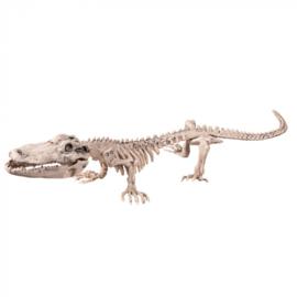 Krokodillenskelet (16 x 50 cm)
