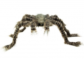 Scary hairy spider 50 x 70 cm
