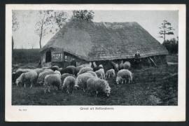 HELLENDOORN, Groet uit Hellendoorn. Gelopen kaart.