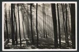 NUNSPEET, De zon breekt door in onze bosschen. Gelopen kaart.
