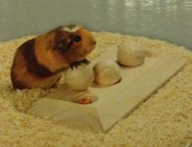 Inteligentiespeelgoed voor konijnen - cavia`s