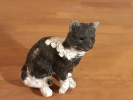 Kat gevuld met Onyx en witte Howliet