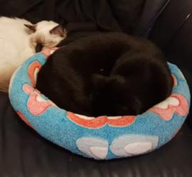 Mand grote katten 48 cm doorsnede