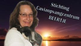 Stichting Caviaopvangcentrum Beertje (verzonden)