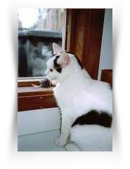 Stichting Jasmijn - opvang voor zwerfkatten (ontvangen)