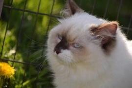 Kattenopvang 't Pluizenhuys  (ontvangen)