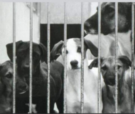 Hulp aan honden achter tralies 2019