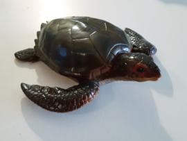 schildpad groot