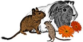 Knaagdierenopvang Wind Whistler  (ontvangen)