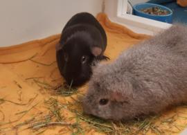Mojo en Pepper