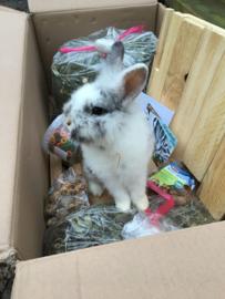 Bedankje konijnenopvang Hazel