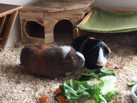 Cookie en Milo