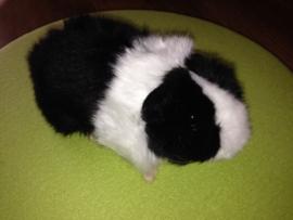 pluche cavia 19 cm  zwart-wit