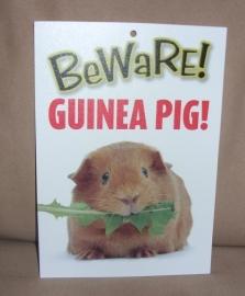Beware Guinea pig