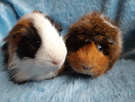 Ollie en Jop